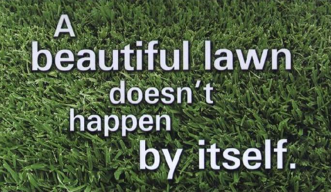 beautiful-lawn